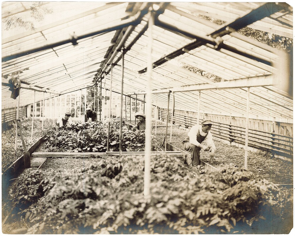 RG 120 - US657 - Farm science at the Baron de Hirsch Agricultural School of Woodbine NJ - students at work in the vegetable greenhouse - 1907.jpg